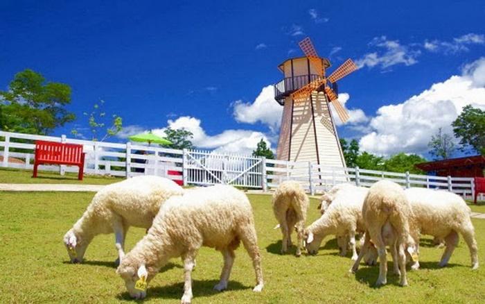 ท่องเที่ยวสวิส ชีพ ฟาร์ม (Swiss Sheep Farm) จังหวัดเพรชบุรี